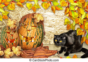 Card Halloween. Black cat and orange pumpkin.