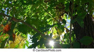Green park trees background backlit.