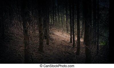 Walking Through Gloomy Woods - POV Walking slowly between...