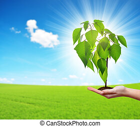 crescendo, pequeno, mão, mulher, árvore
