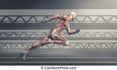 Muscular system - Male muscular system running on track ....