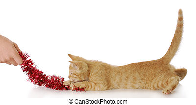 playing with kitten - hand pulling on red cat toy with...