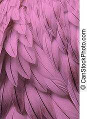 Pink fluffy feather closeup