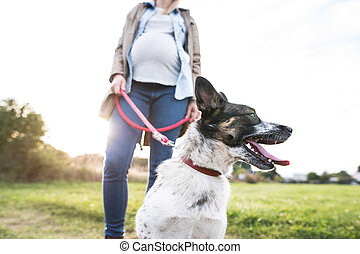 Unrecognizable pregnant woman with dog in green sunny nature...