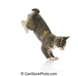 kitten jumping - cute ten week old kitten jumping down with...