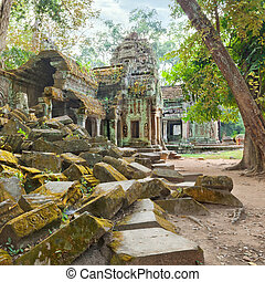 Ta Prohm Temple ancient ruins, Angkor - Ta Prohm famouse...