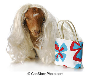 female goat - south african boer goat doeling dressed up...