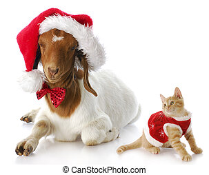 christmas kitten and santa goat - cute kitten in christmas...