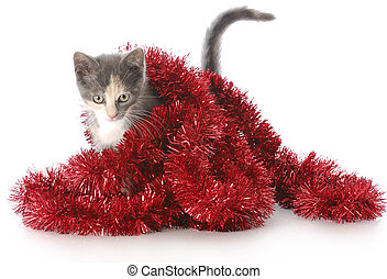 kitten playing with christmas garland - adorable nine week...