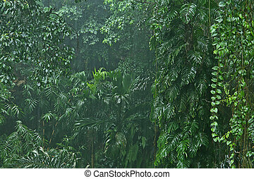 Rainfall in the jungle - heavy rainfall in the jungle,...