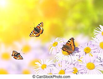 飛行, 蝴蝶, 花, 在上方