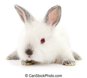 White bunny rabbit - Isolated image of a white bunny rabbit...