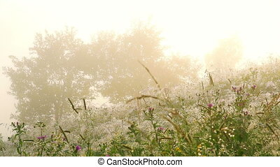 Flowers with Dew Drops - Flowers with Dew Drops at Sunrise...