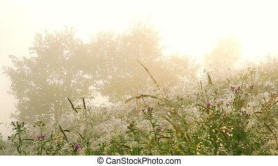 Flowers with Dew Drops. - Flowers with Dew Drops at Sunrise....