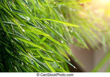 Green bamboo leaves after rainfall.