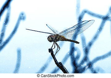 Dragonfly red tail perch on branches.