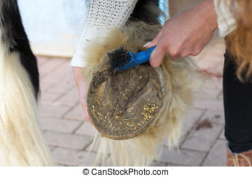 woman cleans the horses hooves with a brush