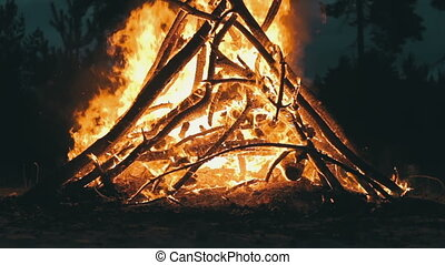Big Campfire from Branches Burn at Night in the Forest