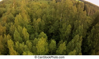 Forest landscape aerial view - Deep forest summer view from...