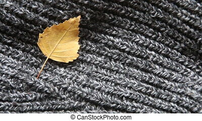 autumn background - yellow leaf - autumn background fallen...