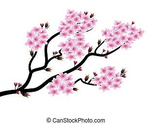 Spring bloom - An illustration of spring bloom branch on...