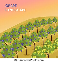 Vineyard Plantation of Grape-Bearing Vines - Wine landscape....