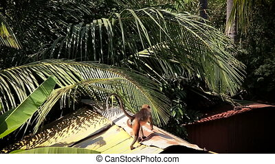 Monkey on the roof of rustic barn