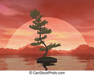 Scotch pine bonsai tree - 3D render