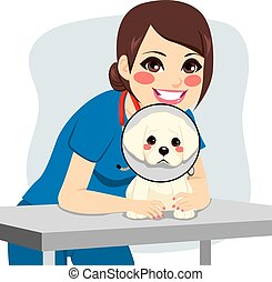 Veterinarian Dog Collar - Cute little dog with cone collar...