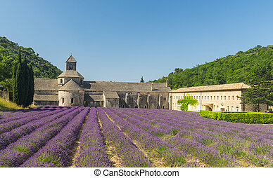 Senanque Abbey - Cistercian Abbey of Senanque and blooming...