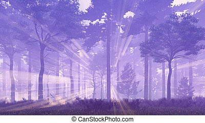 Sun rays in foggy pine forest