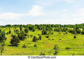 Landscape of small trees in meadow.