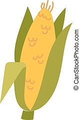 Corn cobs vector illustration. Healthy grain maize vegetable...