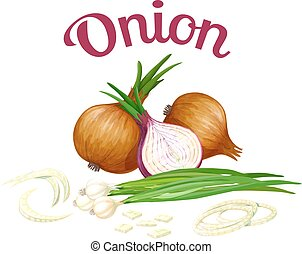 Onion. Vector illustration made in a realistic style,...