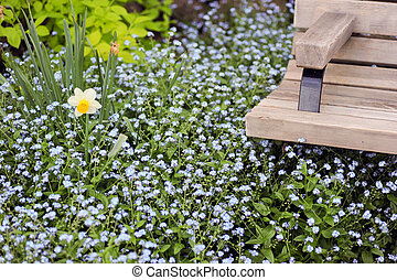 spring scene - a single daffodil and park bench surrounded...