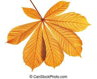 Autumn leaves of chestnut tree (Aesculus hippocastanum)...