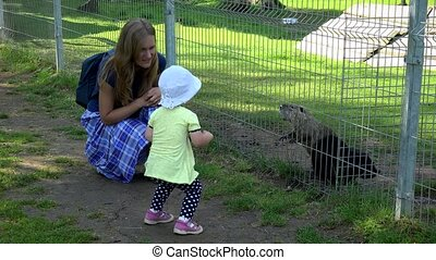 toddler girl with mother enjoy muskrat ondatra zibethicus...