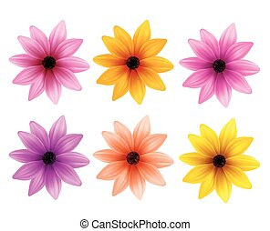 Set Colorful Daisy Flowers Spring