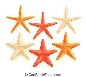 Set of Vector Starfish Vector - 3D Realistic Set of Vector...