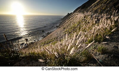 Pampas Grass and Pacific Ocean - Pampas grass blowing in the...