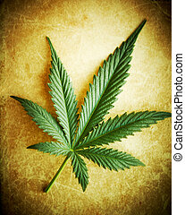 Cannabis leaf on grunge background, shallow DOF