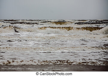 Stormy winter sea the wind bends trees