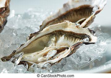 close up fresh raw oyster on a plate - A platter of fresh...
