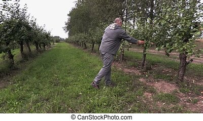 Agronomist check apple orchard