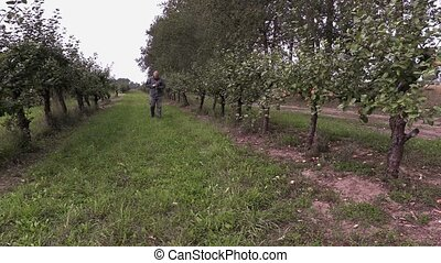 Agronomist walks through apple orchard
