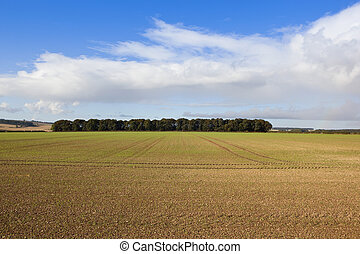cultivated land with copse - a newly cultivated field with...