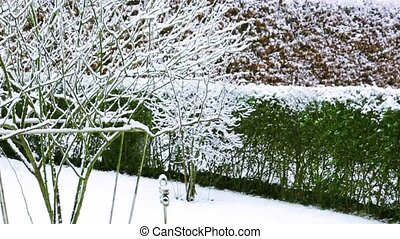 Snowfall in the garden.
