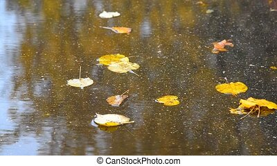 Fall leaf lying in puddle with reflection of tree