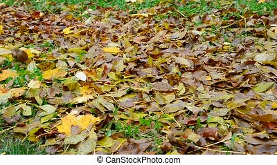Many different leaves lie on ground under a tree - Many...