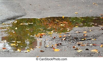 Fall leaf lying in puddle with reflection of tree - Fall...